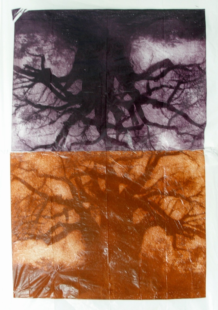 Baobab Reflection | Solarprint Lithography on plastic bag |  30 x 40 [SOLD}