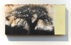 Baobab in Zim | Digital Print, South African Soil & Acrylic mounted on Canvas | 6.25x9