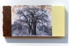 Baobab in Zim   Digital Print, South African Soil & Acrylic mounted on Canvas   6x9 [SOLD}